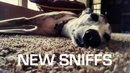 New Sniffs Aug 2018